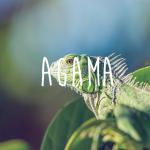 オシャレで高機能なWordPress無料テーマなら、「Agama」